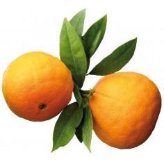Huile essentielle Oranger Petit Grain