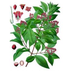Huile essentielle de Bois de santal et d'amarys