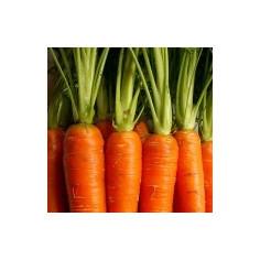 Macérat huileux de carotte